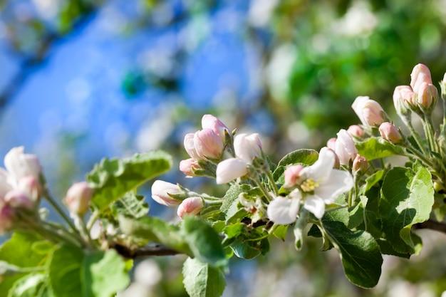 花の咲く木