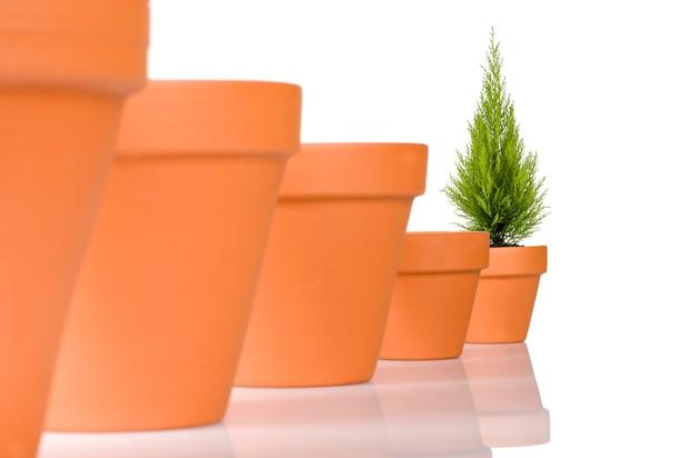 行の植木鉢