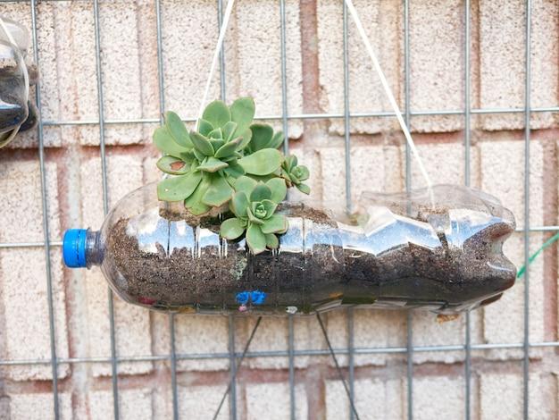 壁にぶら下がっているプラスチックのボトルで作られた植木鉢、小学生によって作られました
