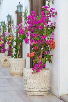 白い壁の近くに明るい装飾的な花が付いている植木鉢