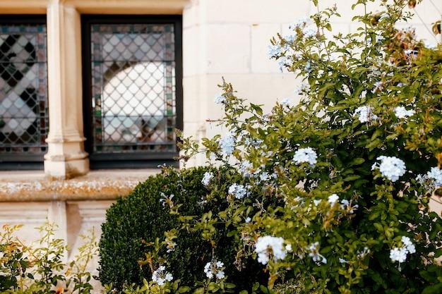 古い城の窓の近くの花と茂み。