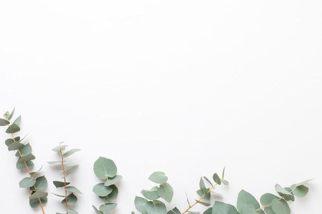 Состав цветов и эвкалипта. узор из различных ярких цветов на белом фоне. плоская лежала жизнь.