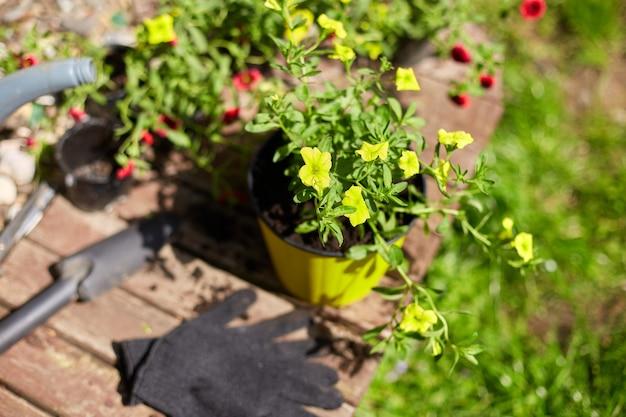 木の表面に花と園芸用具。かごの中のペチュニアと園芸用品。春の庭の作品コンセプト。