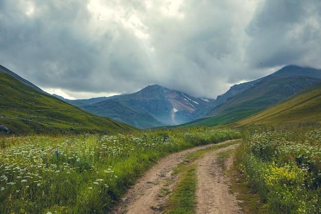 Цветы и дорога в пейзаже горы