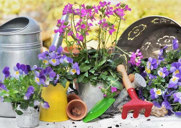 Цветы и инструменты