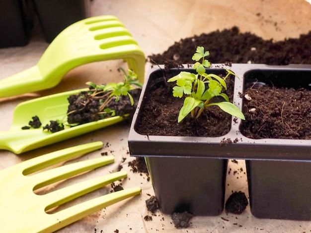 レトロな木製の背景に花と野菜。観葉植物。鉢植えの苗。