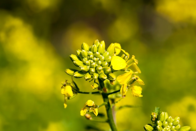 Цветы выращивают для озеленения
