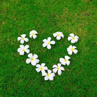 Цветы лежат на траве в форме сердца.