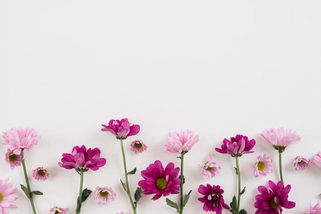 꽃 배경 복사 공간