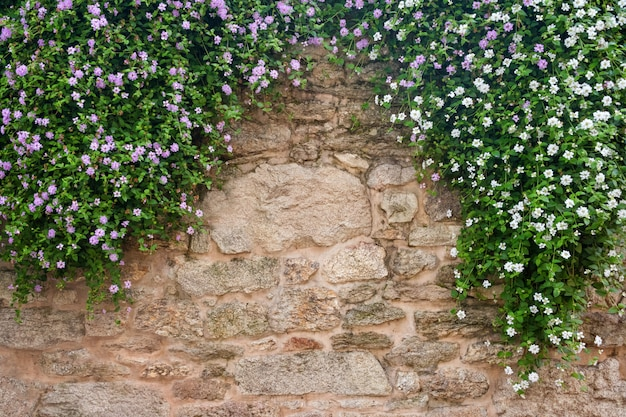 Flowers on a background of stone wall