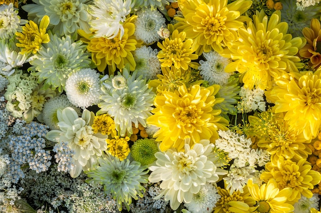 Flowers background. yellow and  white chrysanthemum flowers. top view. holiday background.