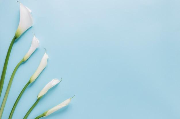 花の背景 Premium写真