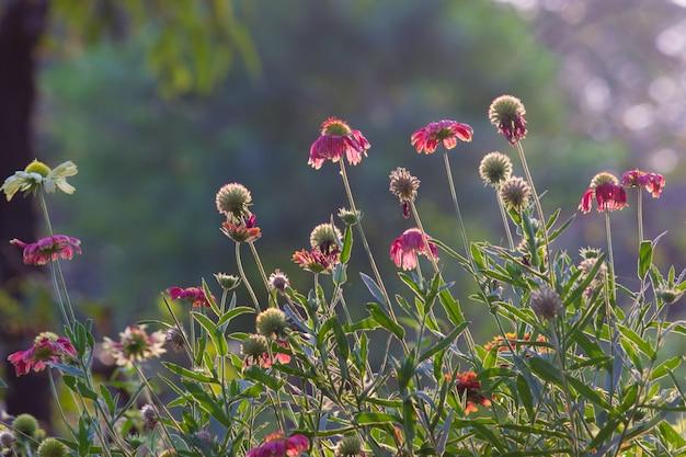 春の自然光に咲く花