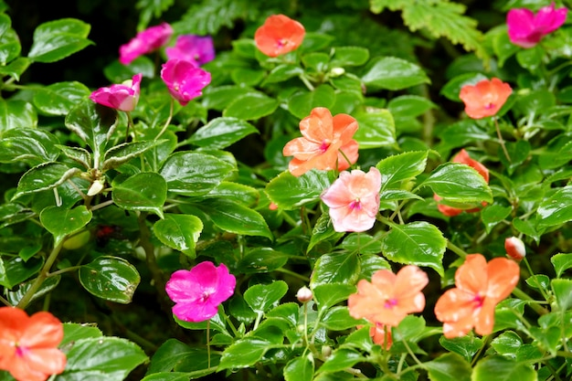 Flowers blooming on the ground after rain