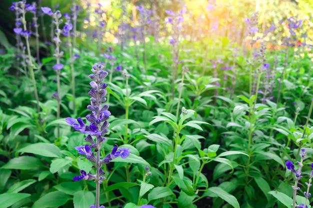朝、庭に咲く花