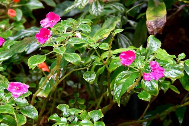 비 후 지상에 피는 꽃