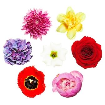 Цветы. яркий красочный набор цветов. вид сверху