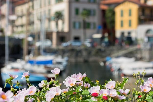 Цветы у озера комо, в италии