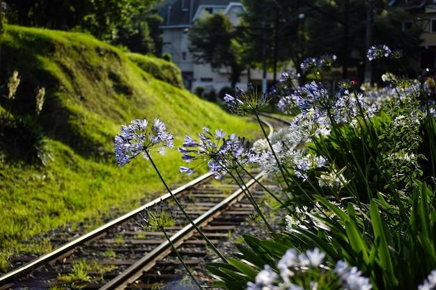 Flowers on the campos do jordao railroad railway