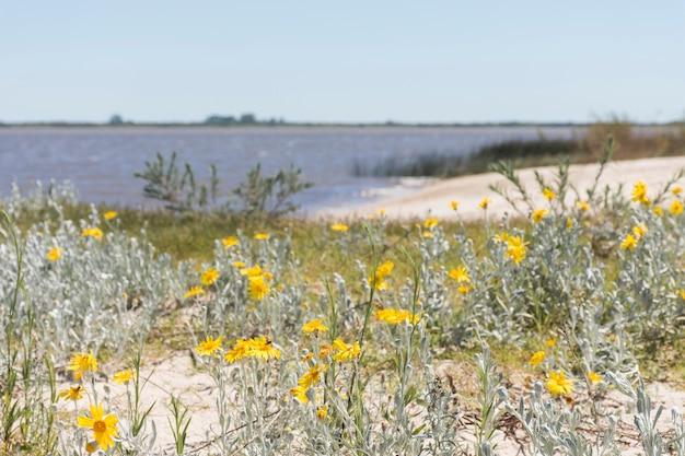 Flowers on coast near water