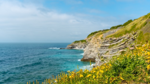Flowers on the coast and the sea from the natural park of saint jean de luz called parc de sainte barbe, col de la grun in the french basque country