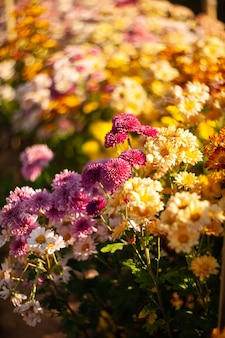 Flowers colorful in the garden soft and select select focus.