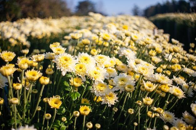 Цветы красочные в саду мягкие и выберите фокус.