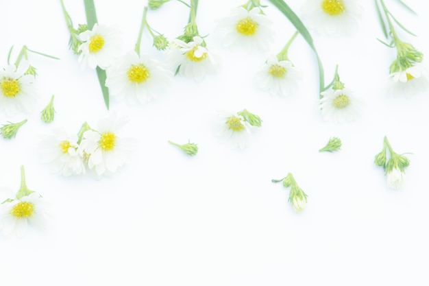 Flowers composition, border made of daisy white flowers,