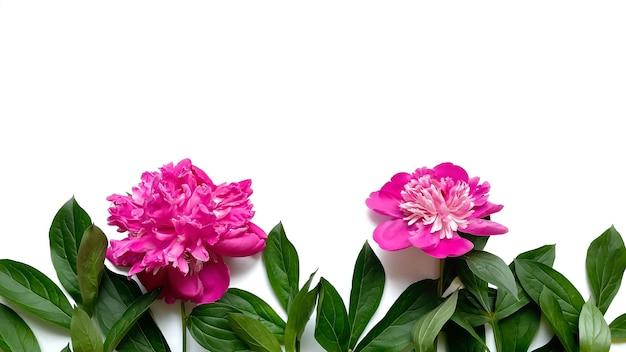 Цветочная композиция из зеленых листьев и розовых пионов на белом фоне в день свадьбы