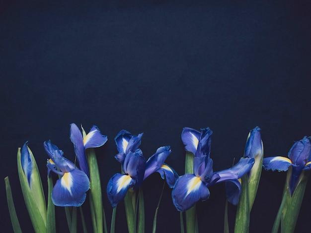 花の構成。青い背景に菖蒲の花で作られたフレーム。バレンタインデー、母の日、女性の日のコンセプト。フラットレイ、上面図。