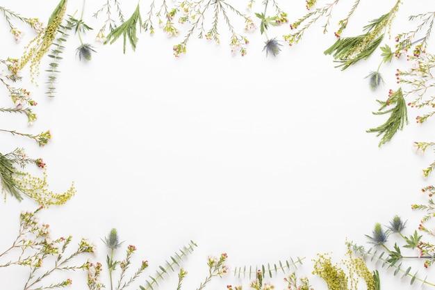 Композиция цветов. рама из пастельных гербер на белом фоне. плоская планировка, вид сверху, копия пространства.