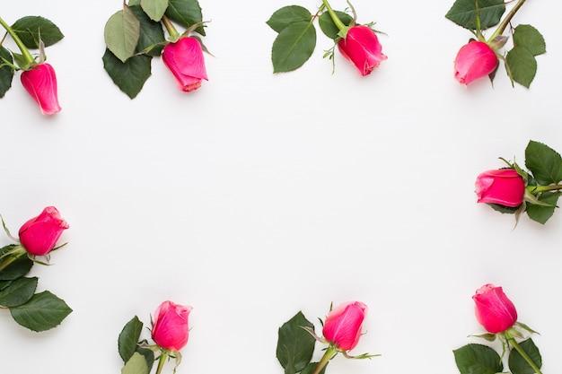 花の構成。白い背景に赤いバラで作られたフレーム。フラットレイ、上面図、コピースペース。