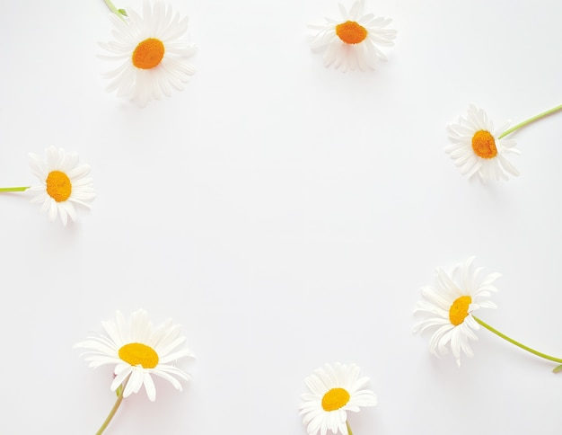 Композиция цветов. рама из белых цветов ромашки на белом фоне. день свадьбы, день матери и женский день концепции. плоская планировка, вид сверху.