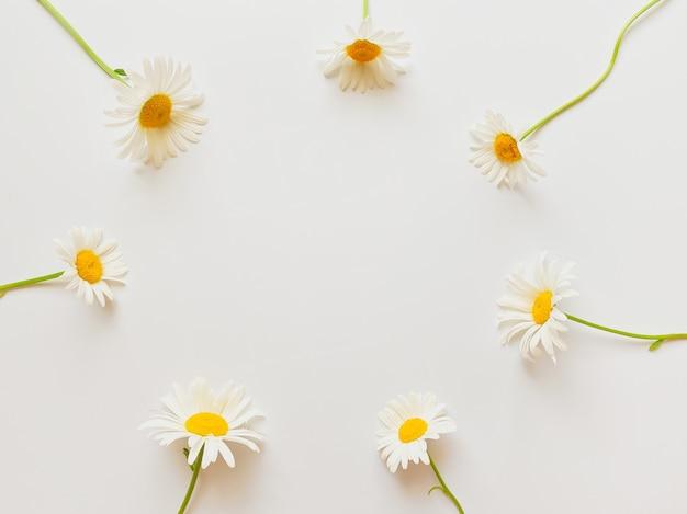 꽃 구성입니다. 흰색 바탕에 흰색 카모마일 꽃으로 만든 프레임. 결혼식 날, 어머니의 날 및 여성의 날 개념. 평평한 평지, 평면도.