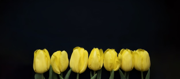 青い背景に黄色いチューリップで作られた花の構成フレームバレンタインデー母の日と