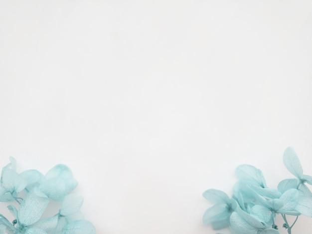 Композиция цветов из голубых цветов гортензии на белом фоне. весенний, летний шаблон для ваших проектов. плоская планировка, копия пространства.