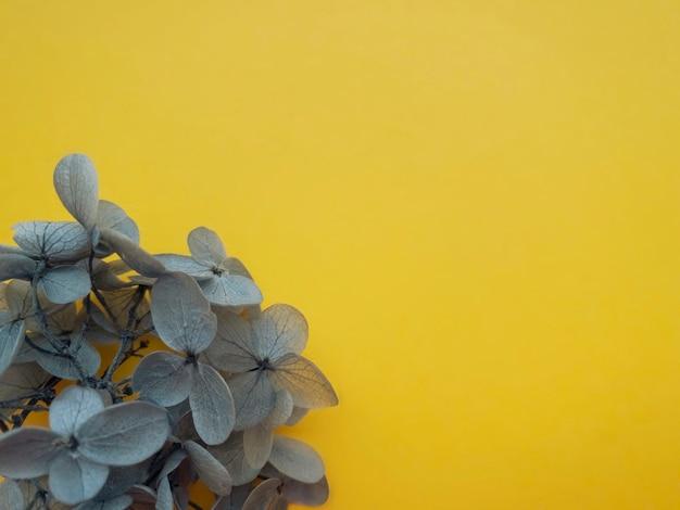 수국 꽃의 꽃 구성은 조명 배경에서 궁극적인 회색을 나타냅니다. 프로젝트의 2021년 봄, 여름 템플릿의 색상입니다.