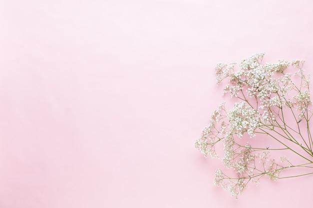 Композиция цветов. цветы гипсофилы на пастельно-розовом фоне. плоская планировка, вид сверху, копия пространства