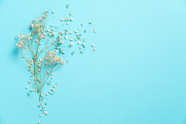 Flowers composition. gypsophila flowers on pastel blue . flat lay, top view, copyspace