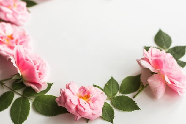 Цветочная композиция из розовых роз, изолированные на белом фоне, цветочный дизайн, плоская планировка, вид сверху
