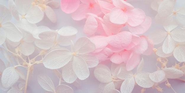 Композиция цветов. узор из цветов гортензии разных цветов на белом фоне. красивый весенний, летний фон. плоская планировка, формат баннера.