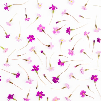 Flowers composition pattern made of pink and purple flowers on white background