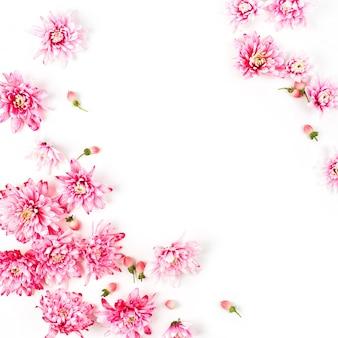 Композиция цветов. розовая хризантема на белом фоне. плоская планировка, вид сверху.