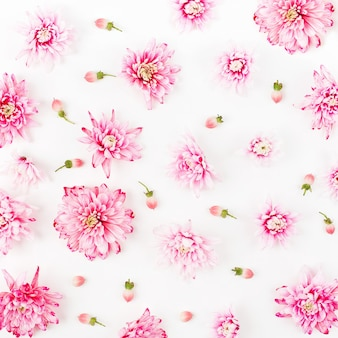 Flowers composition. pink chrysanthemum on white background. flat lay, top view.