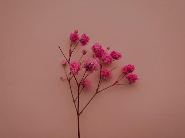 Композиция цветов. розовые цветы на бежевом фоне. весна, лето концепция. плоская планировка, вид сверху, копия пространства.