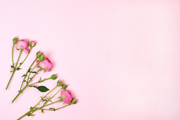 Flowers composition. pink rose flowers. flat lay, copy space
