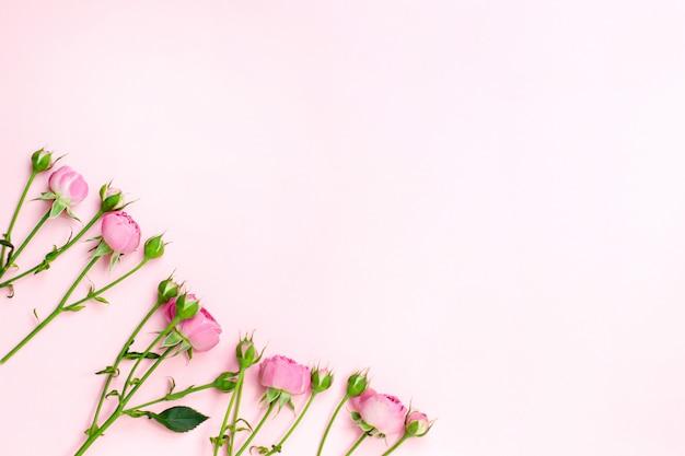 Flowers composition. pink rose flowers. flat lay, copyspace