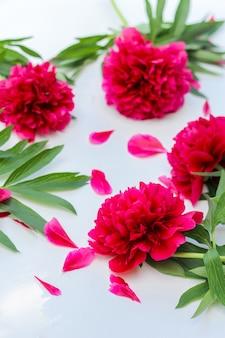 꽃 조성. 흰색 바탕에 붉은 모란 꽃. 평평한 누워, 평면도.