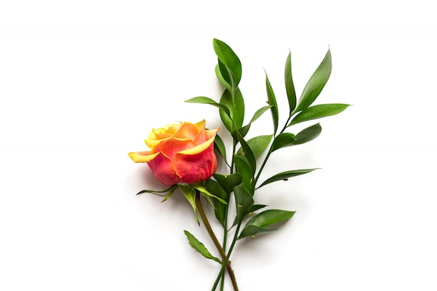 Flowers composition. rose flower and ruscus branches on white background. flat lay, top view, copy space.