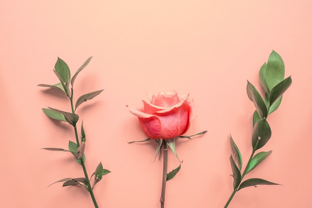 Flowers composition. rose flowers and eucalyptus branches on pink background. flat lay, top view, copy space.